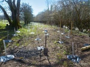 P1090779 saplings J Brightwater