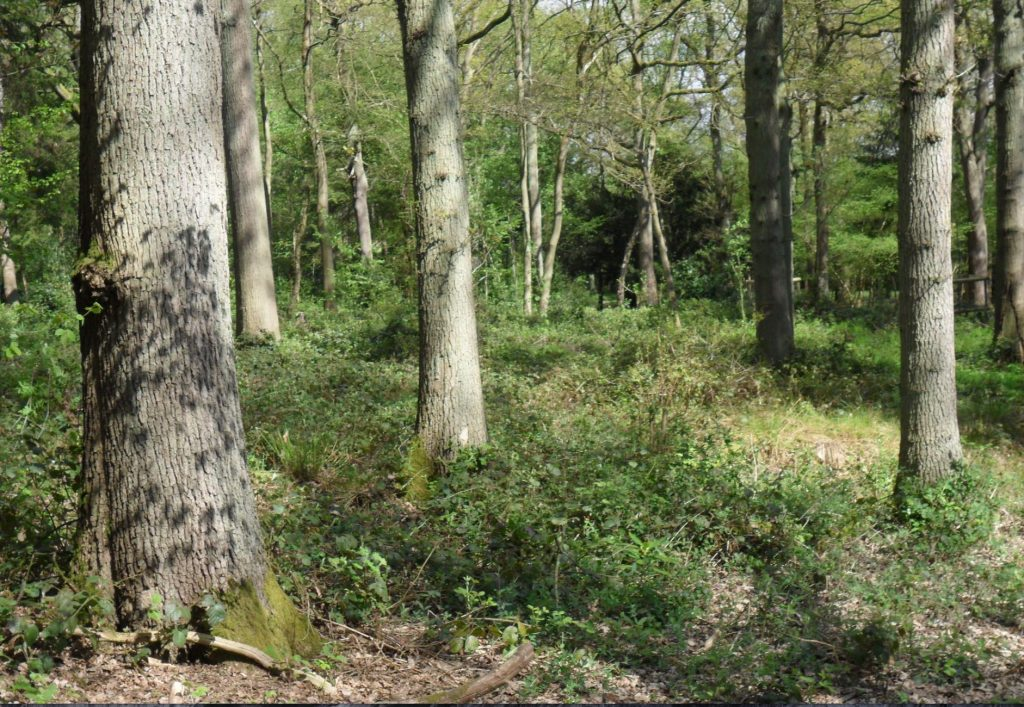 woodland wales